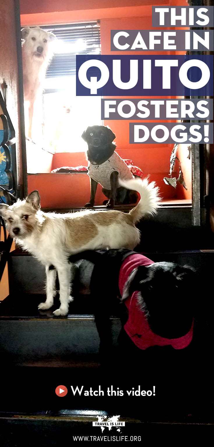 This cafe fosters dogs