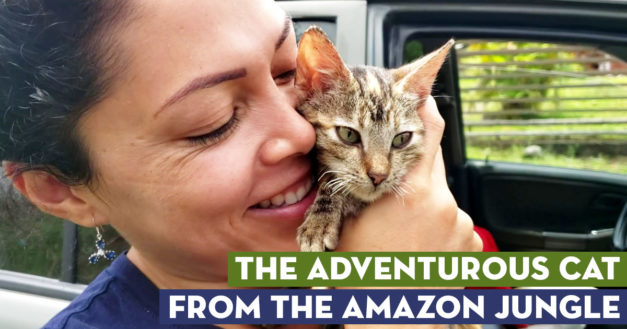 The Adventurous Kitten From The Amazon Jungle
