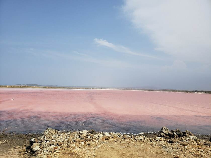 The Pink Sea Colombia